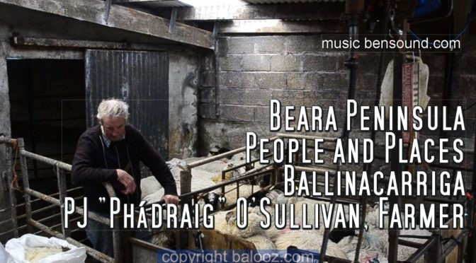 Beara Sheep Shearing