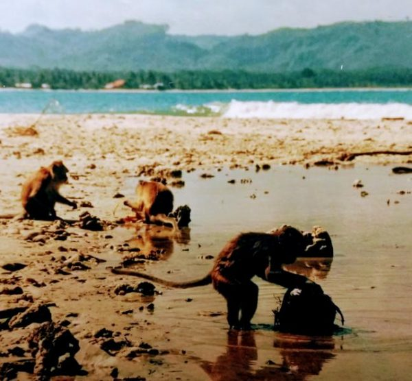 Beach Monkey, Java, Indonesia